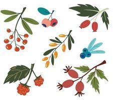 coleção com colorido doodle berry branches and leaves buckthorn blueberry rosehip groselha rowanberry vegan farm desintoxicação natural food concept verão food vector illustration flat design