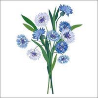 flores centáurea isoladas sobre fundo branco buquê floral de verão bluebell selvagem e flores de camomila decoração de verão vetor