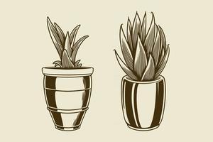conjunto de plantas caseiras desenhadas à mão em vasos vetor