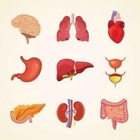 conjunto de ilustração vetorial de órgão interno humano vetor