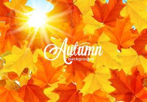 Outono quente iluminado folhas de fundo vetor