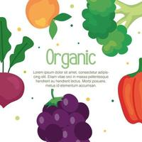 banner de frutas e vegetais orgânicos, conceito de alimentos saudáveis vetor