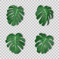 ilustração vetorial. planta verde tropical exótica. monstera folhas em um fundo transparente. vetor