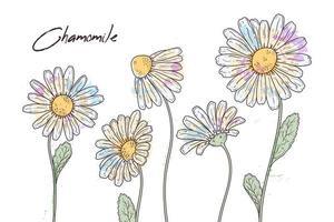 ilustrações de botânica floral. vetor esboça flores de camomila.