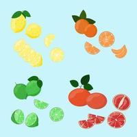 conjunto de frutas cítricas. fatias de limão, tangerina, limão e toranja isoladas. vetor