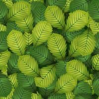 Folhas de avelã sem costura Primavera