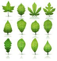 Conjunto de folhas verdes vetor