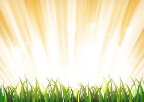 Fundo de luz do sol de verão com folhas de grama vetor