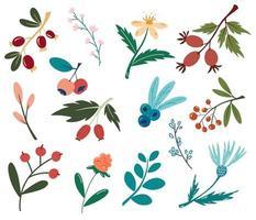 conjunto de frutas e flores. plantas florestais, frutos, flores. vegan, fazenda, desintoxicação, conceito de comida natural. frutos silvestres e flores. elementos decorativos de design. ilustração vetorial no estilo cartoon vetor