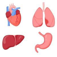 fígado humano coração pulmões e estômago, conjunto vetor