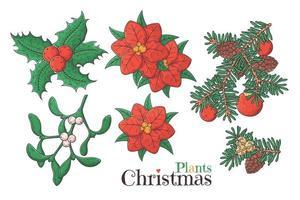 mão desenhada vetor de plantas de Natal.