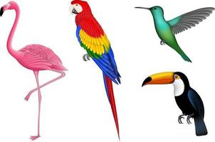 conjunto de pássaros exóticos isolados. pássaros tropicais para fundos de verão. flamingo, papagaio, beija-flor e tucano. vetor