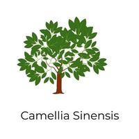 árvore camélia sinensis vetor