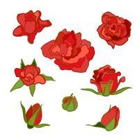 conjunto colorido de vetor com flores. Rosa vermelha. elementos de clipart para cartão postal, banner, impressão de camiseta, convite, cartão de felicitações, pôster