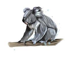 coala de um toque de aquarela, desenho colorido, realista. ilustração vetorial de tintas vetor
