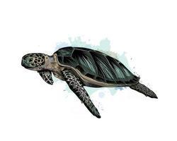 tartaruga marinha de um toque de aquarela, desenho colorido, realista. ilustração vetorial de tintas vetor
