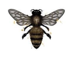 abelha, vespa de um toque de aquarela, desenho colorido, realista. ilustração vetorial de tintas vetor
