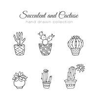 Conjunto de suculentas e cactos de mão desenhada vetor