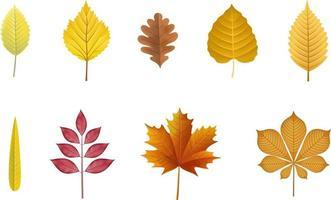 conjunto de folhas isoladas de outono. folhas de outono vetor