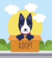 cão bull terrier de adoção vetor