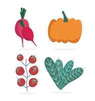 alimentos abóbora tomates rabanete e alface ícones da natureza vetor