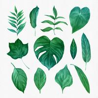Conjunto de clipart de folhas verdes vetor