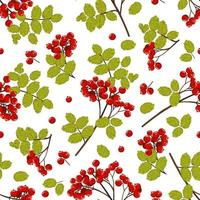 padrão sem emenda de ramos com bagas vermelhas de rowan e folhas verdes. fundo natural do vetor