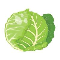 repolho vegetal, ilustração vetorial vetor