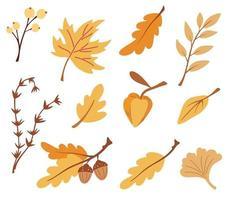 conjunto de folhas de outono, ramos e bagas. coleção de símbolo floral da natureza. carvalho, bordo, bétula, physalis. perfeito para férias sazonais, cartão de felicitações. ilustração em vetor plana.