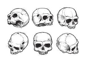 Crânios desenhados à mão vetor