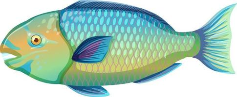 peixe-papagaio em estilo cartoon, isolado no fundo branco vetor