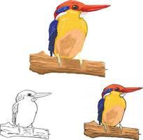 arte vetorial de pássaro vetor
