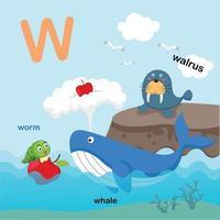 ilustração isolada da letra do alfabeto w-walrus, baleia, worm.vector vetor