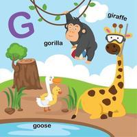 ilustração isolada da letra do alfabeto g-girafa, ganso, gorila. vetor