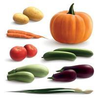 ilustração vetorial conjunto realista de vegetais vetor