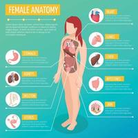 ilustração em vetor cartaz isométrico de anatomia feminina