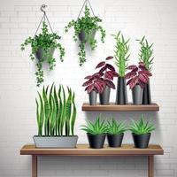 ilustração em vetor interior realista de plantas de casa