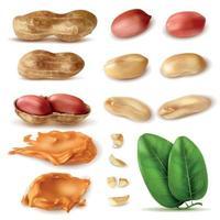 Ilustração em vetor conjunto realista de feijão de amendoim