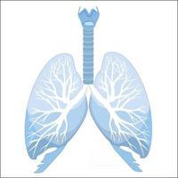 anatomia dos pulmões e brônquios humanos. estrutura do órgão humano. sinal médico vetor