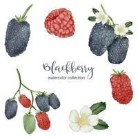 amora em vetor plano de coleção de aquarela de frutas em fundo branco