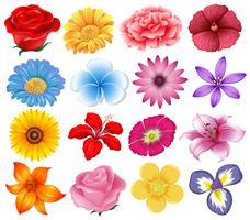 Um conjunto de lindas flores vetor