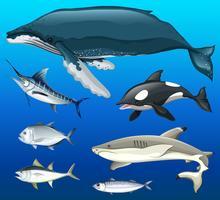 Diferentes tipos de peixe no fundo do mar vetor