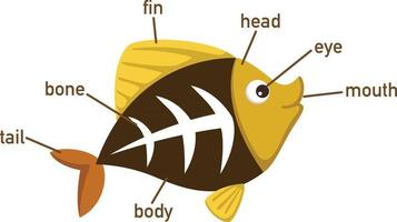 ilustração da parte do vocabulário de peixes de raio-x do corpo. vetor