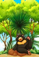 Urso pardo, sentando, ligado, rocha vetor