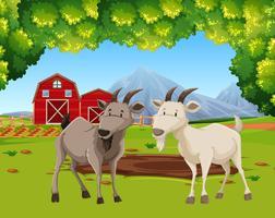 Duas cabras na cena da fazenda vetor