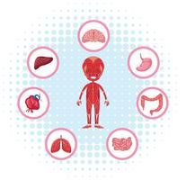 Anatomia humana com diferentes órgãos no cartaz vetor
