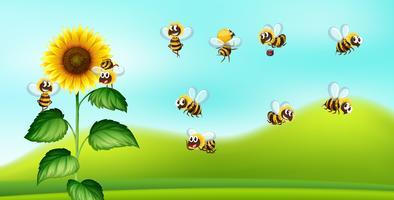 Blackground de natureza de abelha e girassol vetor