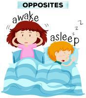 Palavras opostas para acordado e adormecido