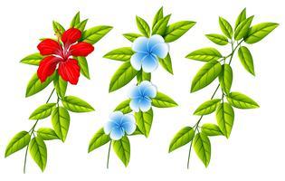 Conjunto de diferentes flores e folhas vetor