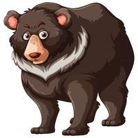 Urso pardo, branco, fundo vetor